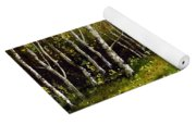 Path Through Silver Birches Yoga Mat