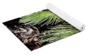 Ponderosa Pine 4 Yoga Mat