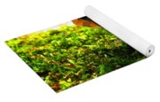 Red American Toad Yoga Mat