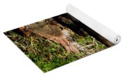 Reflection Of Cypress Knees Yoga Mat