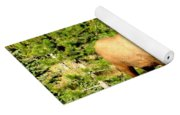 Rocky Mountain Elk Yoga Mat