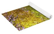 View To The Top Of Beech Tree Yoga Mat