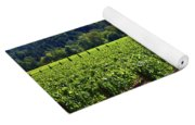 Vineyards In Sonoma County Yoga Mat