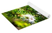 White Flowers Of Kunzea Ambigua Yoga Mat