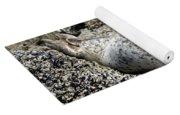 Yawning Harbor Seal - Oregon Coast Yoga Mat