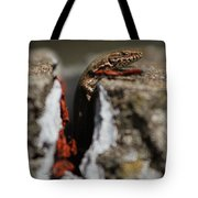 A Lizard Emerging From Its Hole Tote Bag