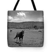 Black And White Pasture With Three Horses Tote Bag