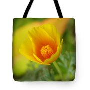 California Poppy In Autumn  Tote Bag