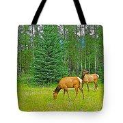 Elk Near Wapiti Campground In Jasper Np-alberta Tote Bag