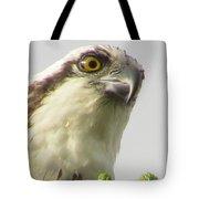 Eye Of The Osprey Tote Bag