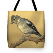 Female Chaffinch Tote Bag