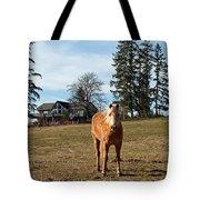 Horse Unbrideled Tote Bag
