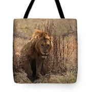 Lions Of The Ngorongoro Crater Tote Bag