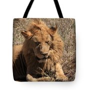 Lions Of The Ngorongoro Crater - Tanzania Tote Bag