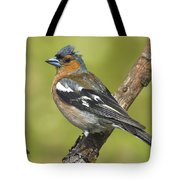 Male Chaffinch Tote Bag