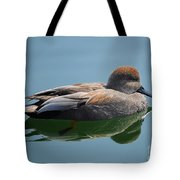 Male Gadwall Duck  Tote Bag