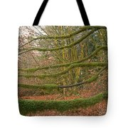 Moss-covered Big Leaf Maple Branches Tote Bag