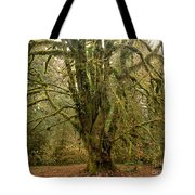 Moss-covered Big Leaf Maple Tree Tote Bag