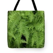 Mountain Ferns Of North Carolina Tote Bag