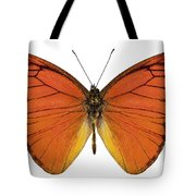 Orange Butterfly Species Appias Nero Neronis  Tote Bag