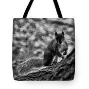 Squirrel In The Park V3 Tote Bag
