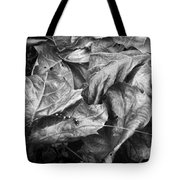 Sycamore Leaves In Autumn Tote Bag