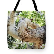 Sycamore Tree's Twisted Trunk Tote Bag