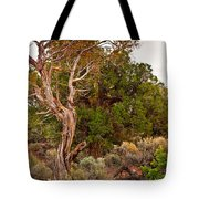 Weathered Tree Sunrise Canyon Dechelly Tote Bag