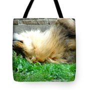 001 Lazy Boy At The Buffalo Zoo Tote Bag