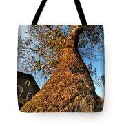 001 Oldest Tree Believed To Be Here In The Q.c. Series Tote Bag