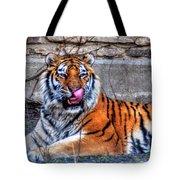 006 Siberian Tiger Tote Bag