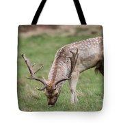 01 Fallow Deer Tote Bag