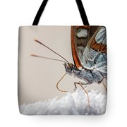 01 Southern White Admiral Butterfly Close Up Tote Bag