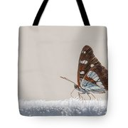 01 Southern White Admiral Butterfly Tote Bag