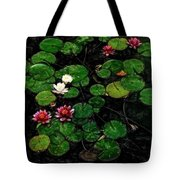 0151-lily - Acanthus Sl Tote Bag
