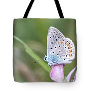 02 Common Blue Butterfly Tote Bag