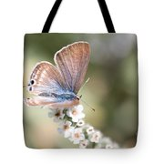 02 Long-tailed Blue Butterfly Tote Bag
