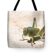 03 Egyptian Locust Grasshopper Tote Bag