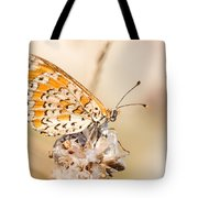 03 Lesser Spotted Fritillary Tote Bag