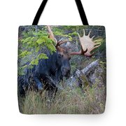 0339 Bull Moose 3 Tote Bag