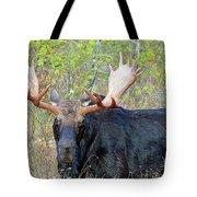 0341 Bull Moose Tote Bag