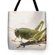 05 Egyptian Locust Grasshopper Tote Bag