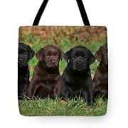 8 Labrador Retriever Puppies Brown And Black Side By Side Tote Bag by Dog Photos