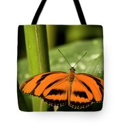 A Banded Orange Heliconian Butterfly Tote Bag