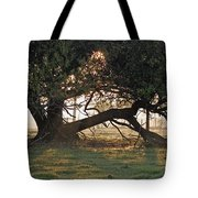 A Tree In Mississippi Tote Bag