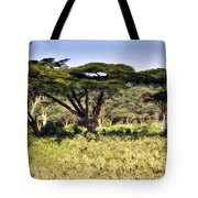 Acacia Trees Tote Bag