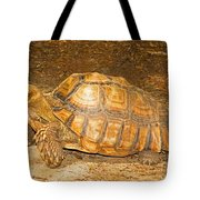African Spur Thigh Tortoise Tote Bag