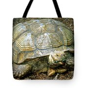 African Spurred Tortoise Tote Bag