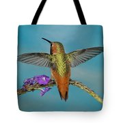 Allens Hummingbird Male Tote Bag