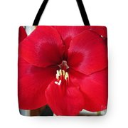 Amaryllis Named Black Pearl Tote Bag